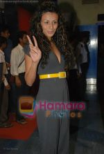 Pia Trivedi at Channel V get Gorgeous press meet in Fame, Andheri on June 24rd 2008(1).JPG