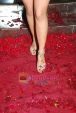 Kim Sharma at Anna Singh_s Store Launch on 5th September 2008 (6).JPG