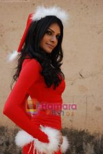 Sherlyn Chopra spends Christmas with kids in Bombay Central on 25th December 2008 (5).JPG