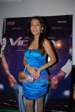 Amrita Rao at Victory film music launch in Vie Lounge on 28th December 2008 (4).JPG