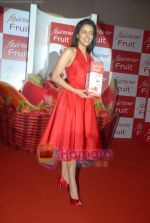 Asin Thottumkal at Fairever Fruit launch in Trident on 20th March 2009 (5).JPG