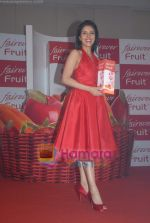 Asin Thottumkal at Fairever Fruit launch in Trident on 20th March 2009.JPG