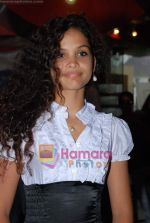 Ayesha Kapur at Sikandar promotional event in PVR on 17th Aug 2009 (17).JPG
