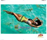 Kingfisher calendar wallpapers (2).JPG