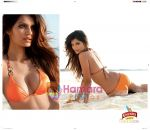 Kingfisher calendar wallpapers (6).JPG