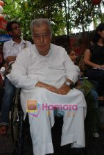 Shashi Kapoor at Prithvi Summertime launch in Prithvi on 10th April 2010 (4).JPG