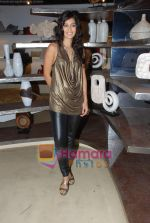 Tara D_souza at Pallete showroom showcase in Mahalaxmi on 25th May 2010 (17).JPG