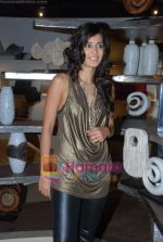 Tara D_souza at Pallete showroom showcase in Mahalaxmi on 25th May 2010 (19).JPG