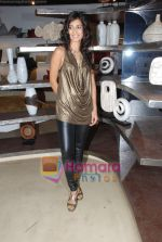 Tara D_souza at Pallete showroom showcase in Mahalaxmi on 25th May 2010 (20).JPG