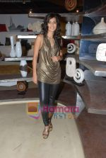Tara D_souza at Pallete showroom showcase in Mahalaxmi on 25th May 2010 (21).JPG