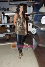 Tara D_souza at Pallete showroom showcase in Mahalaxmi on 25th May 2010 (23).JPG