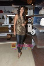 Tara D_souza at Pallete showroom showcase in Mahalaxmi on 25th May 2010 (25).JPG