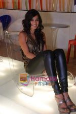 Tara D_souza at Pallete showroom showcase in Mahalaxmi on 25th May 2010 (4).JPG