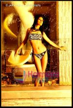 Poonam Pandey The Kingfisher Calendar girl 2011  (7).jpg