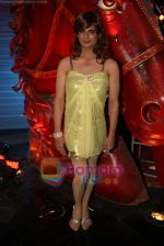 at Comedy Circus new season on location in Andheri on 28th Dec 2010 (5).JPG
