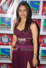 Shikha Singh on the sets of Comedy Circus in Mohan Studios on 14th March 2011 (5).JPG