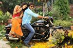 Tapasee Pannu, Gopichand in Mogudu Movie Stills (8).jpg