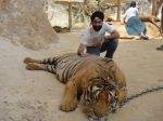 AD Singh tames full grown Tigers in tiger temple, a place on the remote outskirts of bangkok is situated in kanchanaburi on 13th May 2012 (20).jpeg