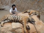 AD Singh tames full grown Tigers in tiger temple, a place on the remote outskirts of bangkok is situated in kanchanaburi on 13th May 2012 (24).jpeg