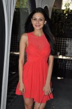 Aanchal Kumar at the Launch of Shatranj Napoli and Polpo Cafe & Bar in Bandra, Mumbai on 30th Sept 2012 (13).JPG