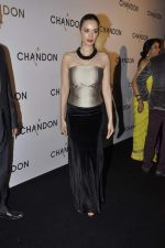 Evelyn Sharma at Moet Hennesey launch of Chandon wines made now in India in Four Seasons, Mumbai on 19th Oct 2013