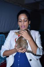 Priyanka Bose at Pet Adoption camp in Khar, Mumbai on 23rd Nov 2013 (17)_5291b0021034d.JPG