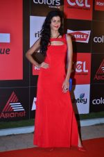 at CCL new season red carpet in Grand Hyatt, Mumbai on 20th Dec 2013 (53)_52b545287d568.JPG