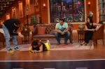 Daisy Shah on the sets of Comedy Nights with Kapil in Filmcity, Mumbai on 9th Jan 2014 (21)_52cfec3a99ed7.JPG