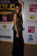 Nigaar Khan at Gold Awards red carpet in Filmistan, Mumbai on 17th May 2014 (336)_5378a41d358eb.JPG