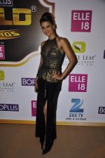 Nigaar Khan at Gold Awards red carpet in Filmistan, Mumbai on 17th May 2014 (337)_5378a41daca44.JPG