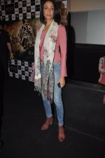 Achint Kaur at Kamal Saldanah_s roar film launch in Mumbai on 31st July 2014 (106)_53db8cc3acf25.JPG