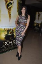 Himarsha V at Kamal Saldanah_s roar film launch in Mumbai on 31st July 2014 (30)_53db8d4326821.JPG