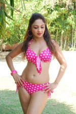 Marisa Verma bikini holi shoot on 5th March 2015 (44)_54f9788181782.JPG