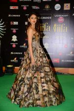 Aditi Rao Hydari at IIFA 2015 Awards day 3 red carpet on 7th June 2015