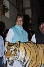 Amitabh bachchan at save the Tiger campaign in Juhu on 11th Aug 2015