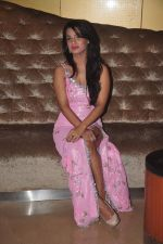 Naina Aswal at ishq  sarfira movie launch on 25th Nov 2015 (20)_5656b669be2c6.JPG