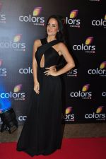 Elli Avram at Colors red carpet on 12th March 2016