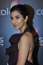 Sophie Chaudhary at Colors red carpet on 12th March 2016 (1)_56e555a0a56c7.JPG