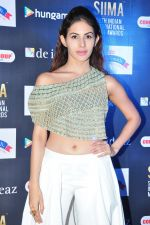 Amyra Dastur at siima awards press meet on 3rd June 2016 (40)_5752d2553d05c.JPG