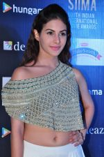 Amyra Dastur at siima awards press meet on 3rd June 2016 (64)_5752d2c60b9bb.JPG