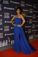 Sonal Chauhan at SIIMA 2016 DAY 1 red carpet on 30th June 2016 (221)_577616d1dd88c.JPG