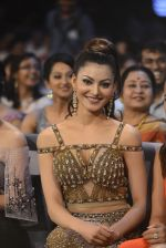 Urvashi Rautela at SIIMA 2016 DAY 1 red carpet on 30th June 2016 (15)_57761610935e9.JPG