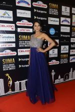 at SIIMA 2016 DAY 1 red carpet on 30th June 2016 (50)_57761683515a3.JPG