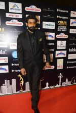 Rana Daggubati at SIIMA Awards 2016 Red carpet day 2 on 1st July 2016