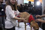 Soha Ali Khan at Pet adoptation on 26th Nov 2016 (68)_583a865566405.JPG