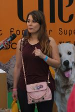 Minissha Lamba At Pet Fed Festival on 17th Dec 2017 (1)_5a3768c55103b.JPG