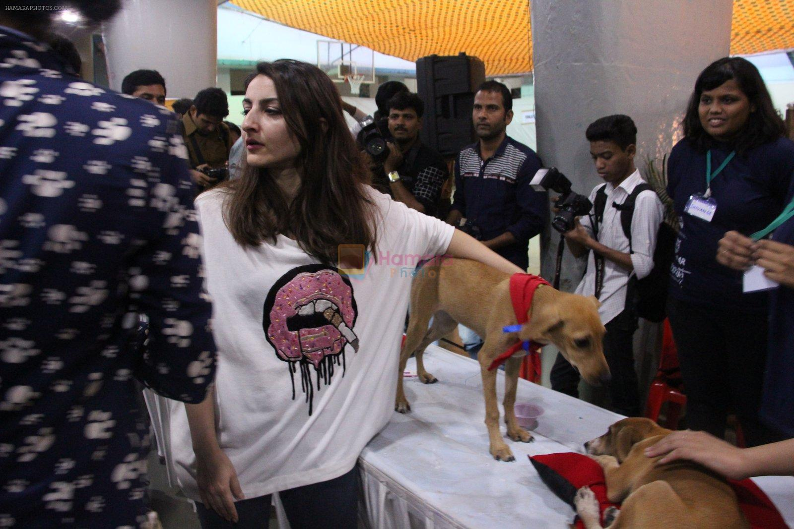 Soha Ali Khan at Pet adoptation on 26th Nov 2016