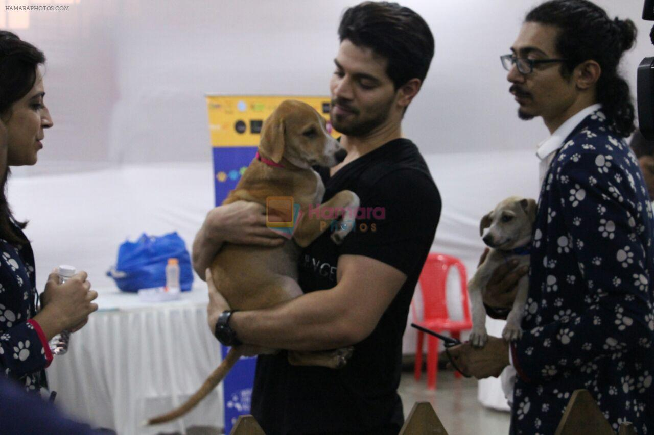 Sooraj Pancholi at pet adoption in Mumbai on 27th Nov 2016